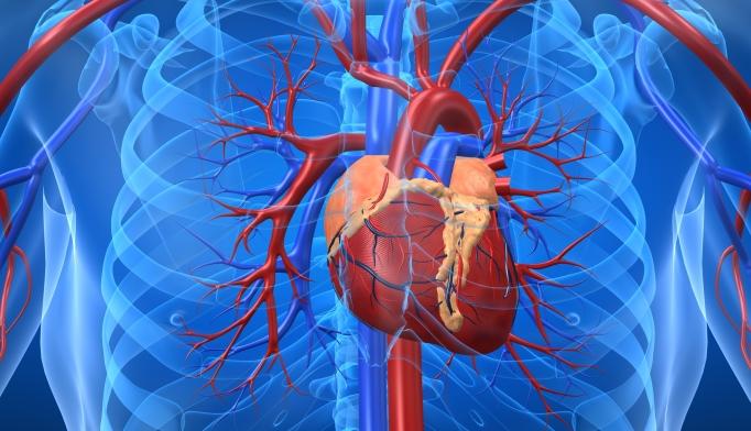 The ELIXA study found that lixisenatide had a neutral effect on cardiac events.