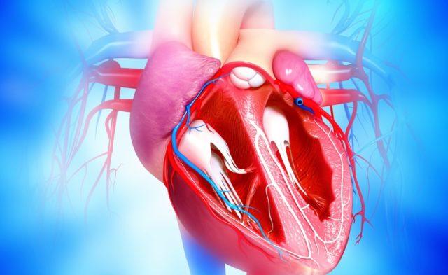 cardiovascular system_G_530341204