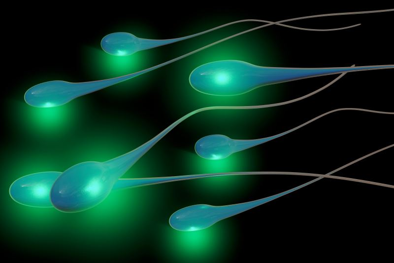 An illustration of sperm