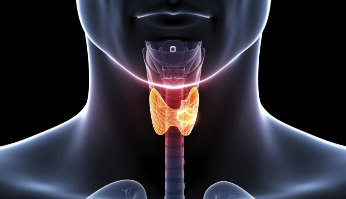 Does Subclinical Thyroid Dysfunction Affect Bone Health?