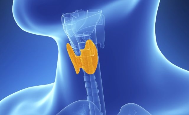 ATA: Levothyroxine Should Remain Standard of Care for Hypothyroidism