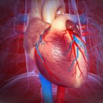Cardiovascular system, heart, artwork