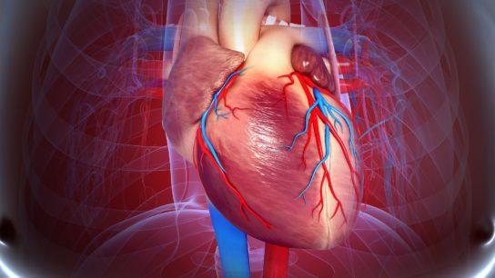 Cardiovascular system, heart, artwork
