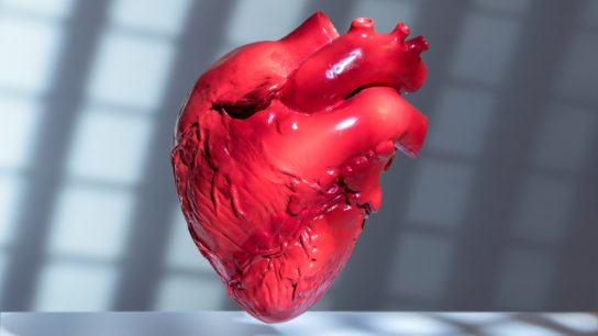 A computer rendered image of a heart.