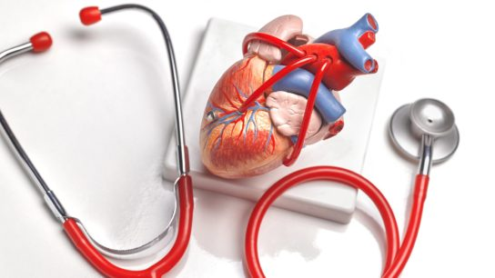 human heart and stethoscope
