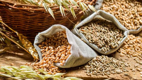 dietary fiber_TS_481882305